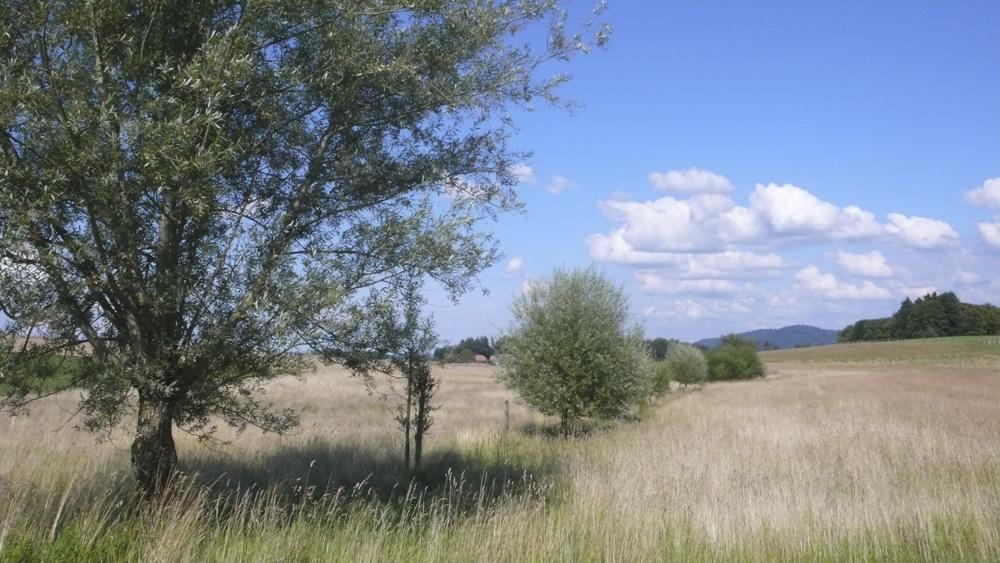 20070713_Ökologischer_Ausgleich_Uettligenfeld_02.jpg